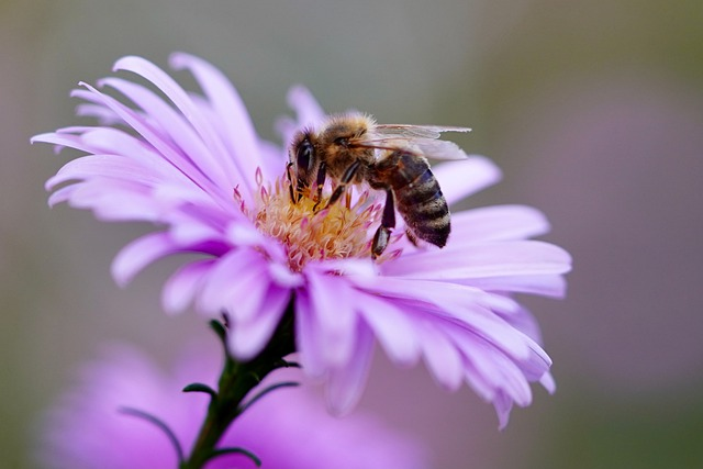 The Battle Against Colony Collapse Disorder